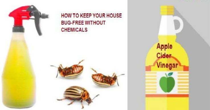 one-ingredient-remedies-to-make-your-house-bug-free-without-chemicals